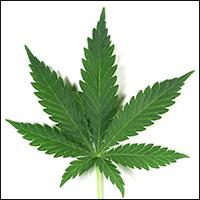 plantas-ID